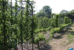 Jardin Fruitier 03
