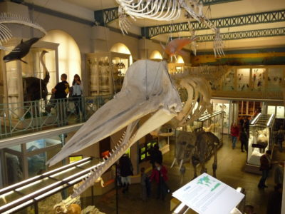 Copyright : Archive Zoom Sur Lille / Musée d'Histoire Naturelle de Lille