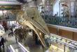 A partir de janvier 2019, les musées lillois seront gratuits tous les dimanches pour les habitants de Lille, Lomme et Hellemmes