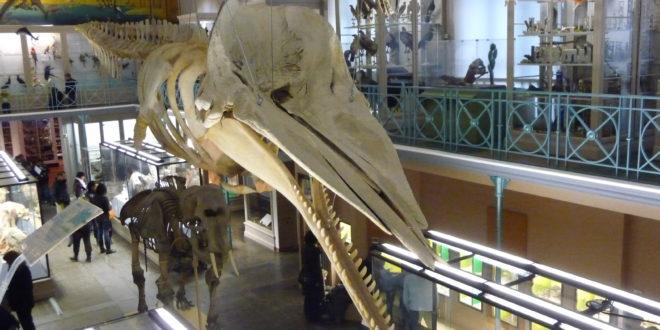 Le Musée d'Histoire Naturelle de Lille propose de nombreuses activités avant sa fermeture pour travaux