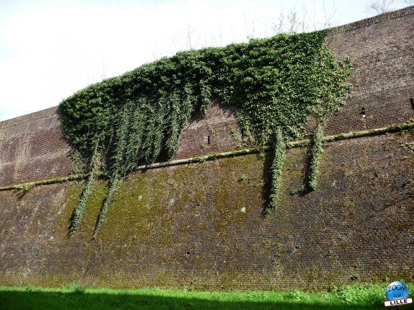 Mur de Communication