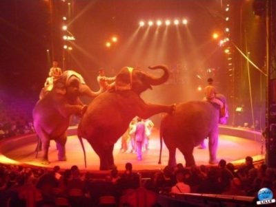 article_cirquegruss2010_04