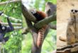 Fermeture annuelle du Zoo de Lille à partir du 24 novembre 2019