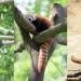 zoo_mai2015