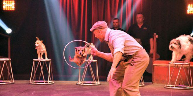 « L'Étoile en Héritage » à Lille, le nouveau spectacle du Cirque Arlette Gruss