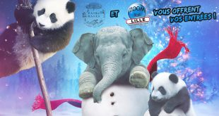 Gagnez vos entrées pour vivre un Noël magique dans le parc animalier Pairi Daiza