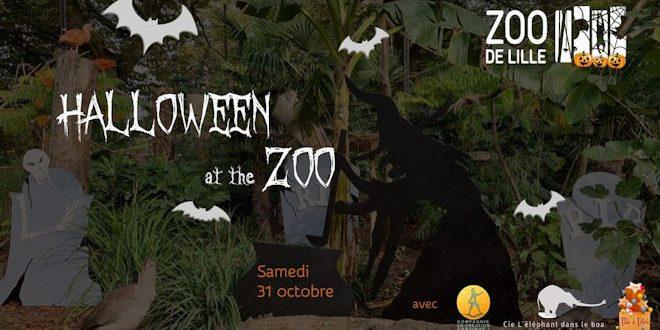 Samedi 31 octobre 2020, le Zoo de Lille vous propose de venir fêter Halloween