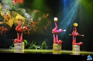 Cirque du Soleil - OVO - 07