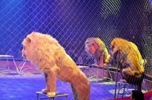 Cirque Arlette Gruss 2015 37