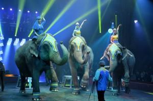 Cirque Arlette Gruss 2015 48