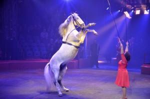 Cirque Arlette Gruss 2016