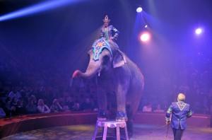 Cirque Arlette Gruss 2016 46