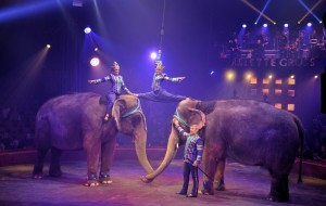 Cirque Arlette Gruss 2016 48