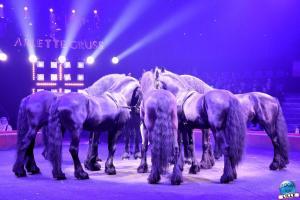Cirque Arlette Gruss 2020 - 07