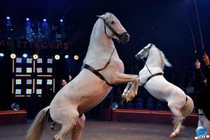 Cirque Arlette Gruss 2020