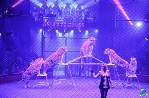 Cirque Arlette Gruss 2018 - 21
