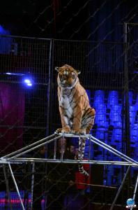 Répétitions Cirque Arlette Gruss 2018 - 07
