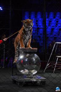 Répétitions Cirque Arlette Gruss 2018 - 10