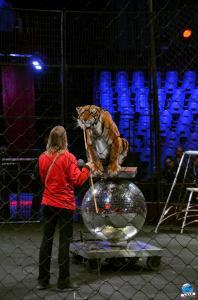 Répétitions Cirque Arlette Gruss 2018 - 11