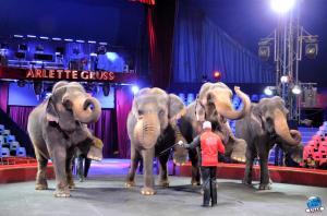 Répétitions Cirque Arlette Gruss 2018 - 17