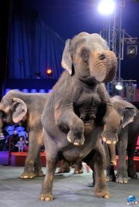 Répétitions Cirque Arlette Gruss 2018 - 19