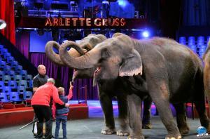 Répétitions Cirque Arlette Gruss 2018 - 21