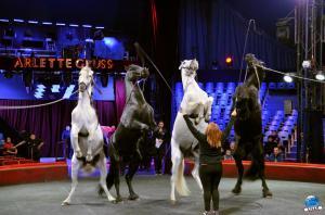 Répétitions Cirque Arlette Gruss 2018 - 27
