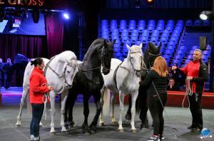 Répétitions Cirque Arlette Gruss 2018 - 28