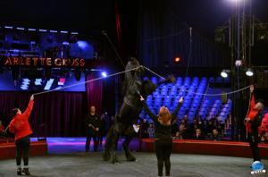 Répétitions Cirque Arlette Gruss 2018 - 30