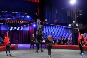 Répétitions Cirque Arlette Gruss 2018 - 31