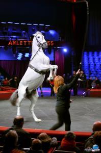 Répétitions Cirque Arlette Gruss 2018 - 32