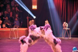Cirque Arlette Gruss 2019 - 44