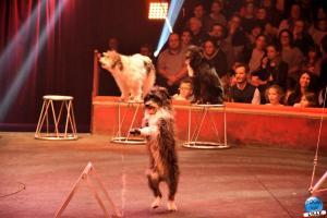 Cirque Arlette Gruss 2019 - 45