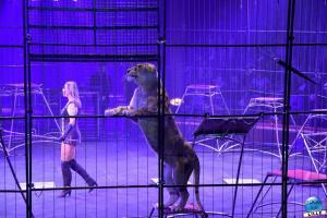 Cirque Arlette Gruss - Novembre 2019 - 36