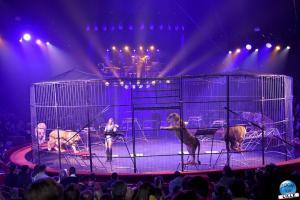 Cirque Arlette Gruss - Novembre 2019 - 38