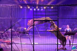 Cirque Arlette Gruss - Novembre 2019 - 39