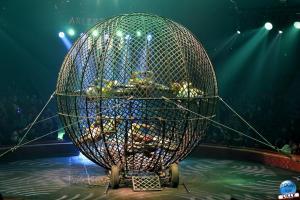 Cirque Arlette Gruss - Novembre 2019 - 59
