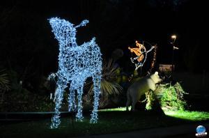 Cita Parc - Noël 2018 - 25