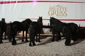 Coulisses Cirque Arlette Gruss 2017 44