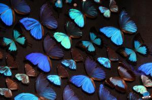 Exposition Bleu ! - 08