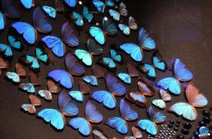 Exposition Bleu ! - 09