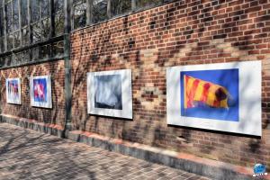 """Exposition """"Le Regard d'Hélène"""" dans la ville - 08"""