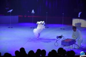 La Grande Fête Lilloise du Cirque 2019 - 39