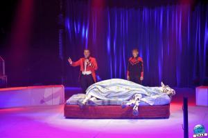 La Grande Fête Lilloise du Cirque 2019 - 51