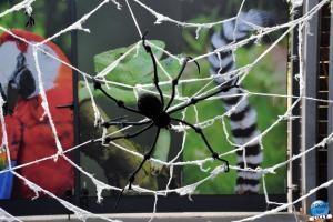 Halloween au Zoo de Lille - 2020