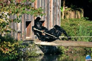 Halloween - Zoo de Lille - 2020 - 23