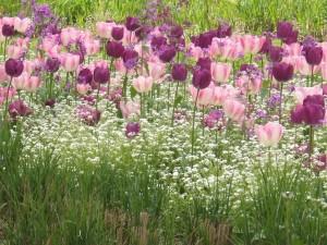 jardin_jean_lebas_11_20090222_1864568724