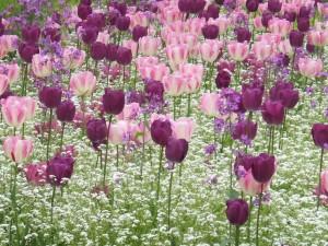 jardin_jean_lebas_12_20090222_1204016544