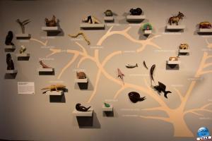 Musée d'Histoire Naturelle de Lille 2019 - 30