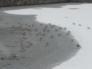 Neige à Lille 312